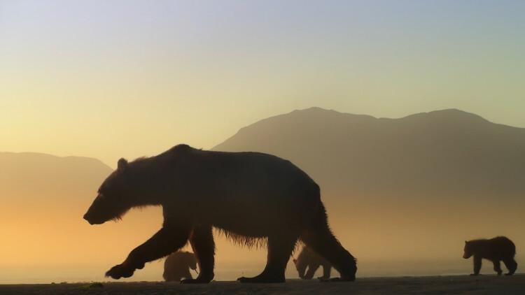02 L'ours en moi